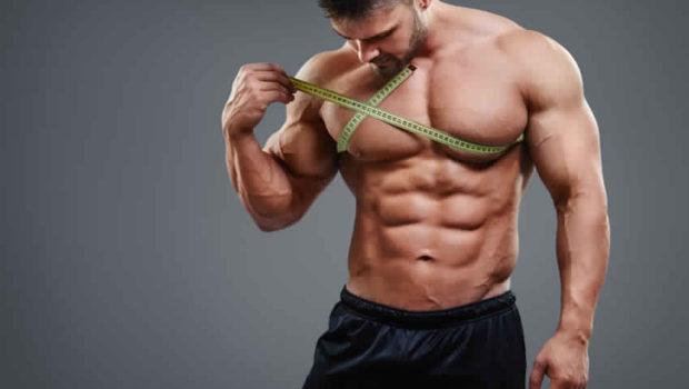 Guide de la prise de masse musculaire | Stéroïde.fr